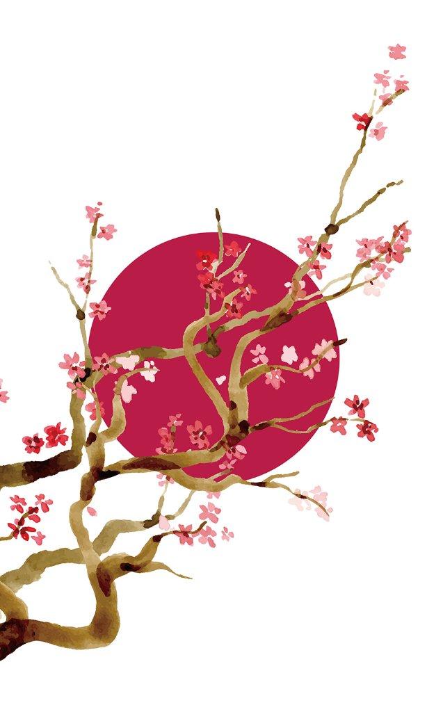 陽紅梅(あみど)の画像