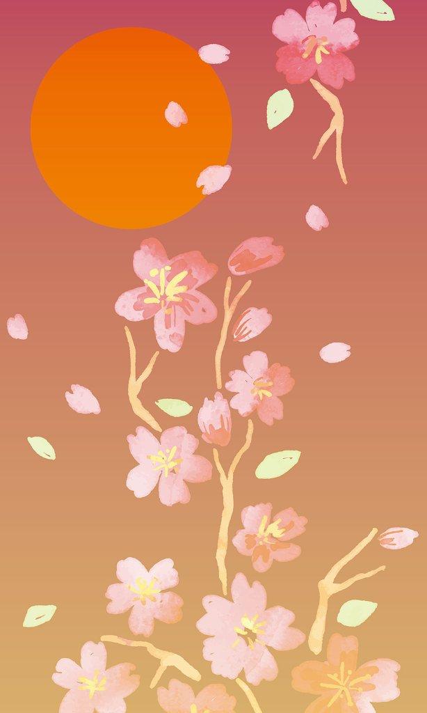 夕桜(あみど)の画像