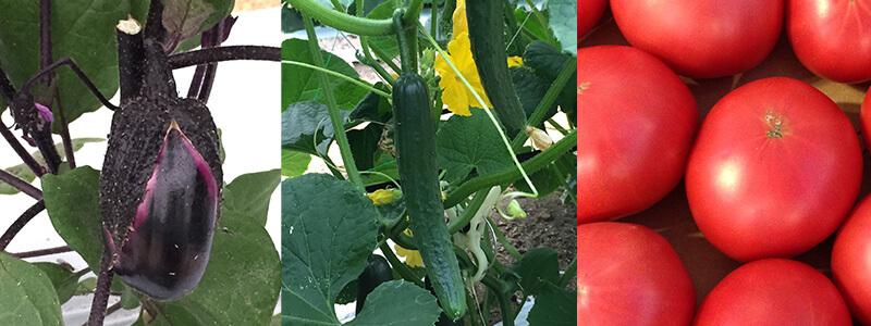 ポテンシャル農業研究所の茄子、トマトなど夏野菜がもうすぐ入荷します!