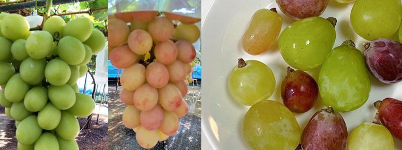 お好きなお野菜を詰め合わせてお届けする「農家さん応援BOX」。好評発売中!