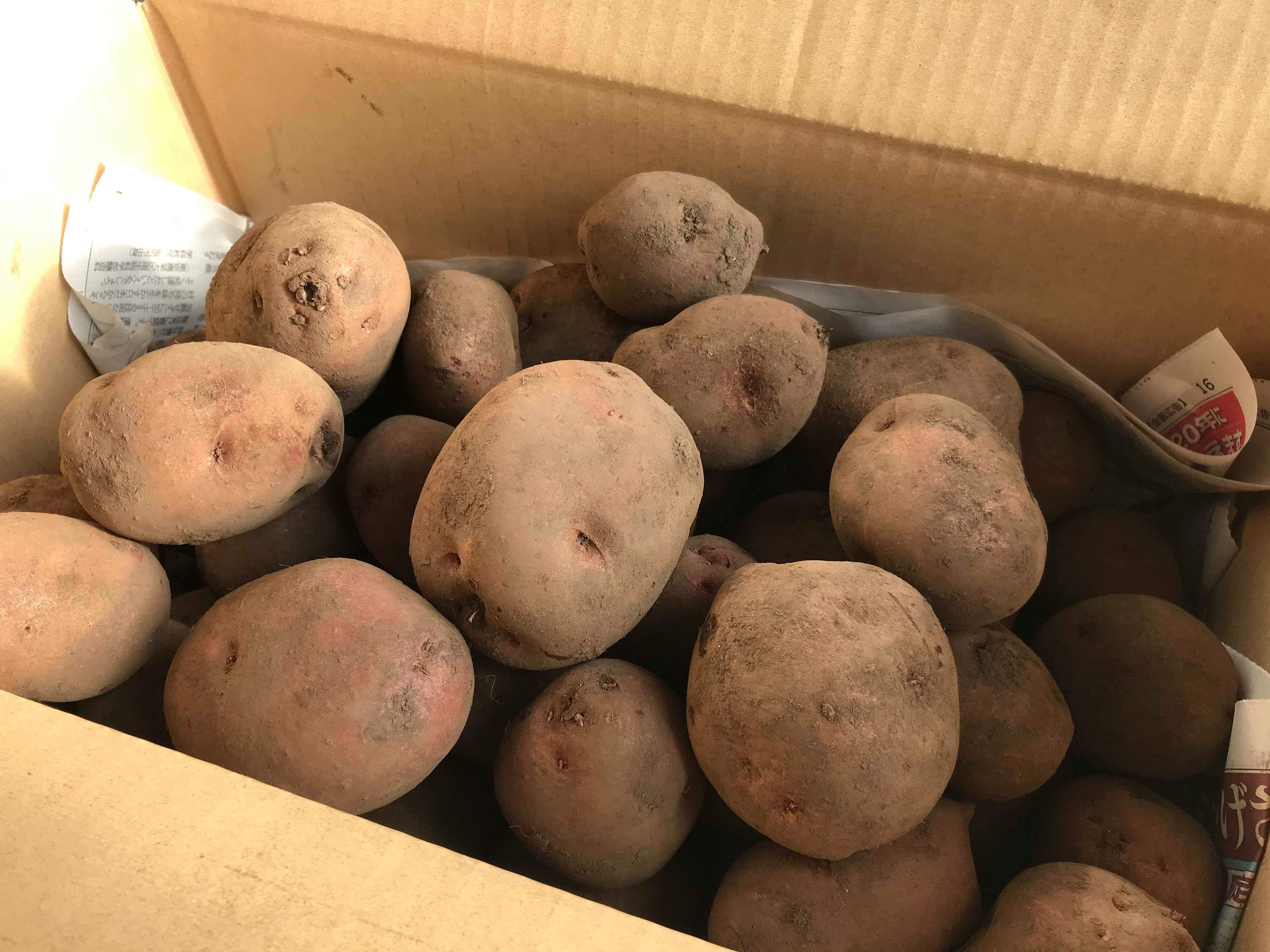 ジャガイモ(アンデスレッド)B品 9キロ箱画像