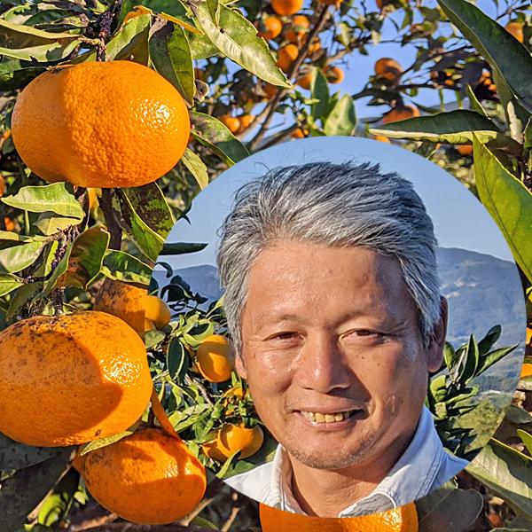 池田自然栽培温州みかん画像