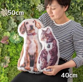 比較用の40cm、50cmサイズのうちの子クッション