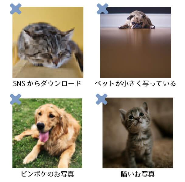 SNSからダウンロードいただいたお写真・ペットちゃんが小さく写っているお写真・ピンボケのお写真・暗いお写真は制作には不向きなお写真になっております