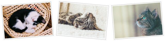 猫好きさんに贈るプレゼントを制作するためのお写真を集める方法