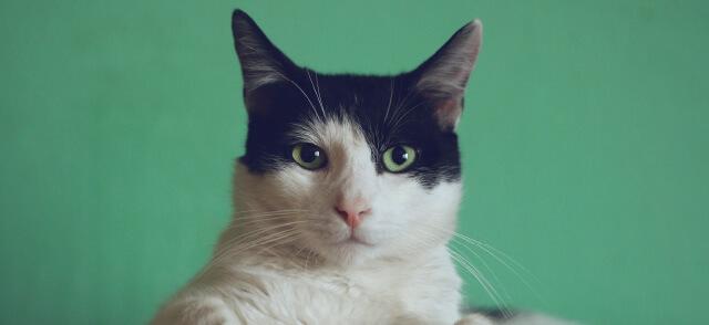 猫好きさんが欲しがるプレゼントって何だろう