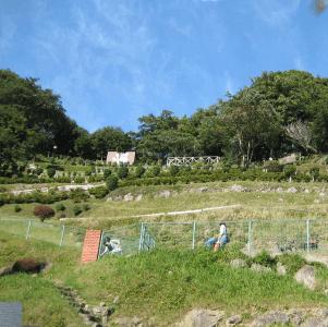 アニマルキングダム