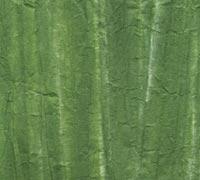 柳絞り 緑の画像