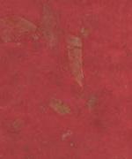 木の葉 落ち葉 赤画像