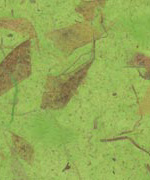 木の葉 落ち葉 黄緑の画像