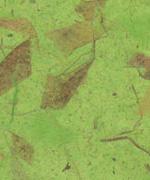 木の葉 落ち葉 黄緑画像