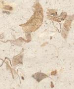 木の葉 落ち葉 白画像