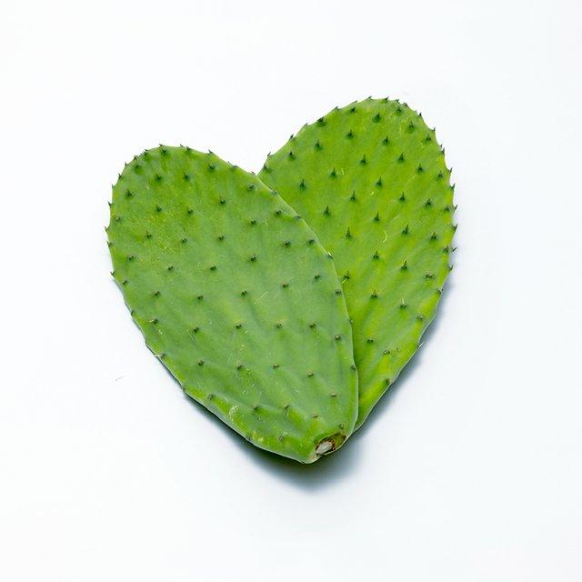 食べるサボテンかめはめ葉 約1kg画像