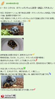トータス・スタイルトピックスBlog