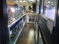 入口より店内を眺める。ヘサキリクガメ(フィギュア)の「さきちゃん」がお出迎え。