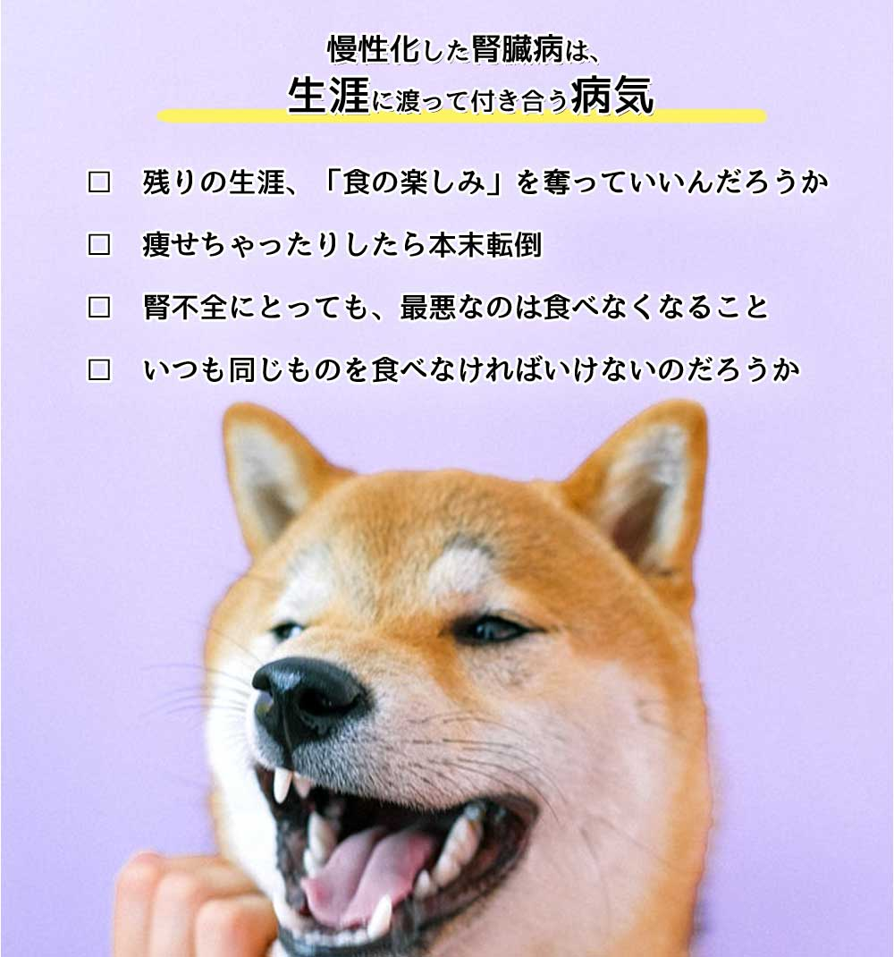 犬の腎臓病とは