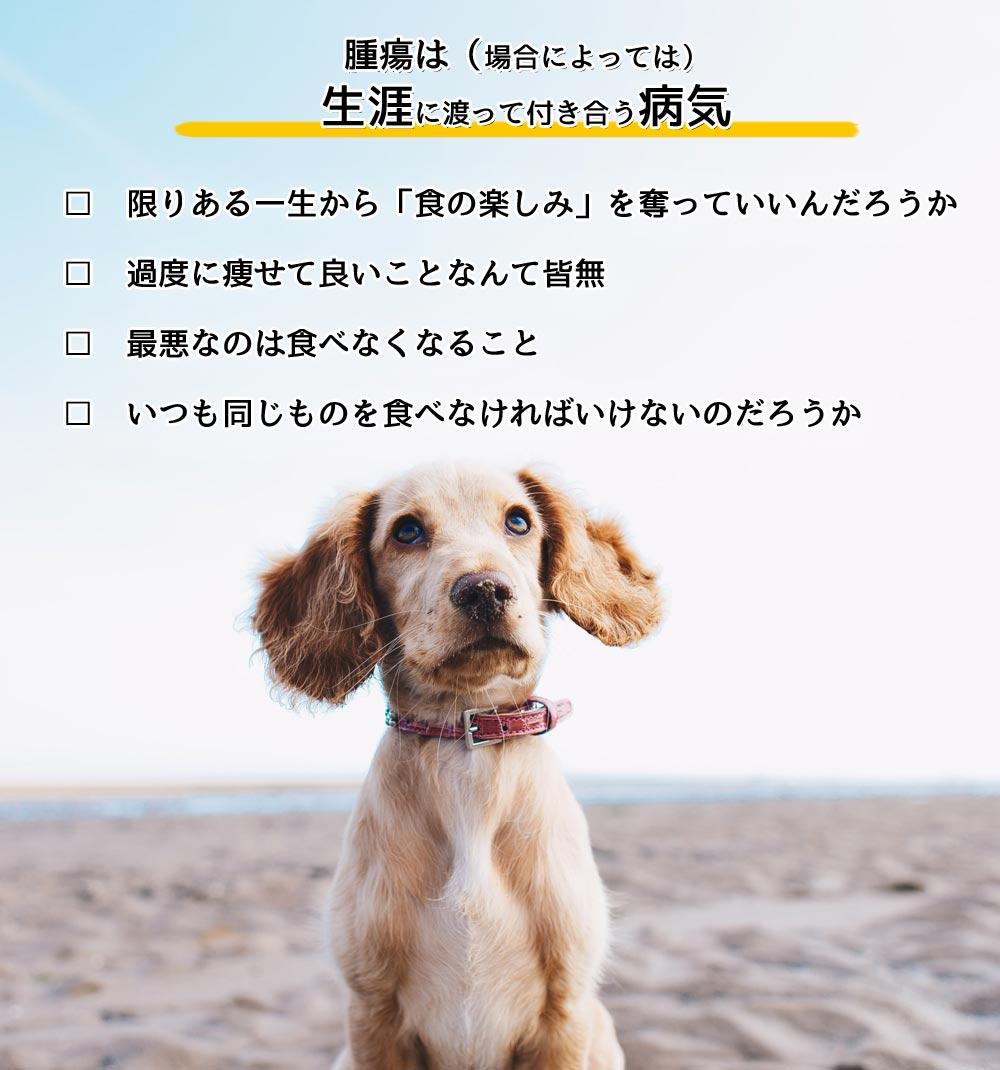 犬の腫瘍と食事