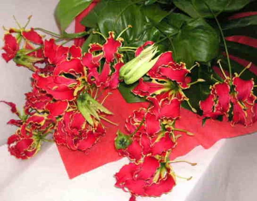 【グロリオサ】 トロピカルの花束の画像
